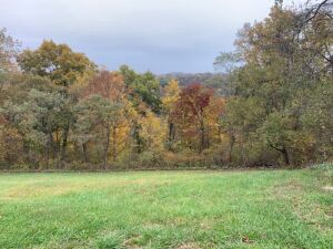93.5 Acres Hunting Grounds