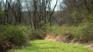 *Absolute Auction* 44 Acres-Recreational Land- Uhrichsville